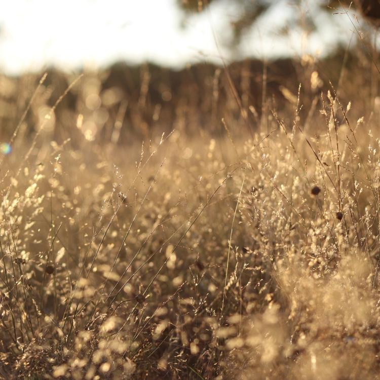 Les 6 étapes pour retrouver un état serein, apaisé et joyeux – Marie ...